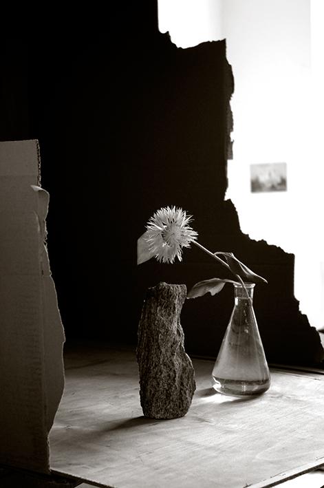Blume,-Stein-in-Kiste