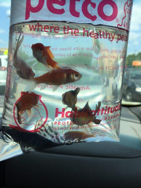 Gary the fish