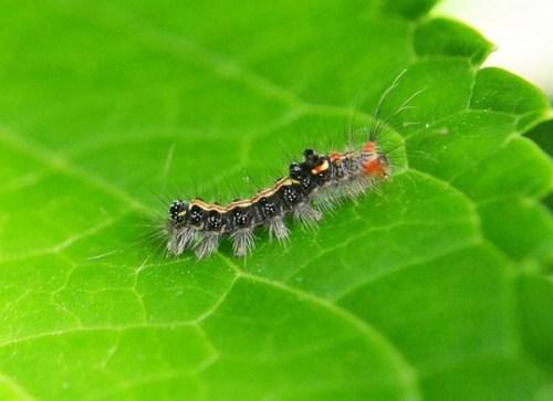 caterpillar-207341_640