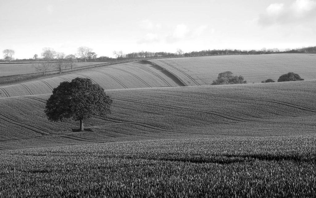 oak-tree-countryside