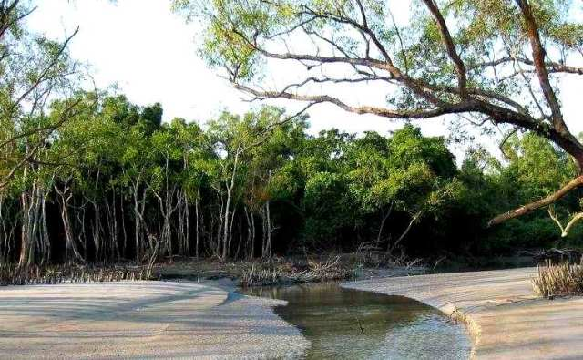 sundarban forest3