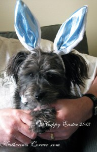 From Our Easter Bunny