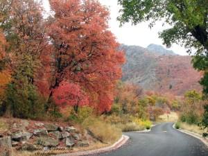 Pieces of Autumn