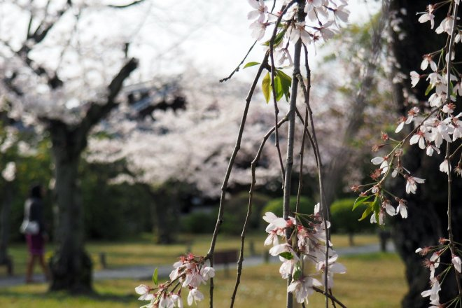 Ein Park in Kyoto