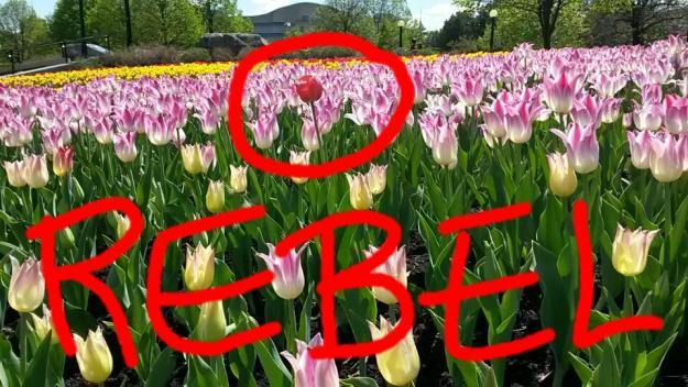 Rebel Flower Meme