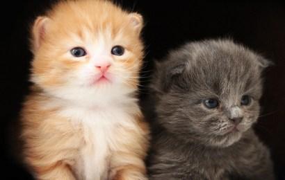 Kattenavn som passer sammen