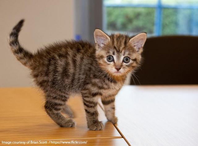 Kattenavn til hunnkatt