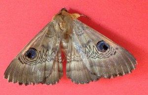 Bookshop-Moth