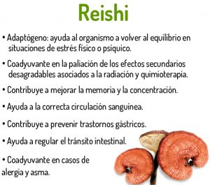 chollo reishi 5