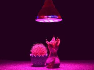 lampara plantas