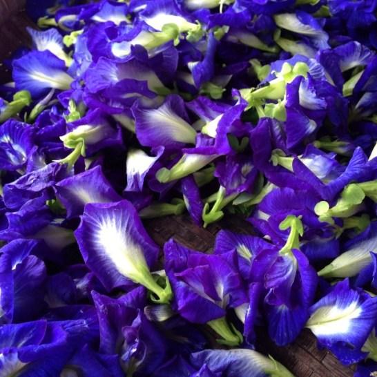 BlueChaiTea-DriedButterflyPeaFlowers-BlueTeaFlower81_zpsb75e95aa