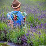 Lavender Farm in Ontario