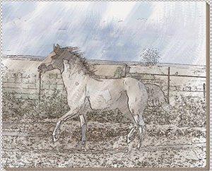 lukisan kuda 13