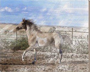 lukisan kuda 16