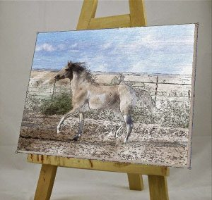 lukisan kuda 18