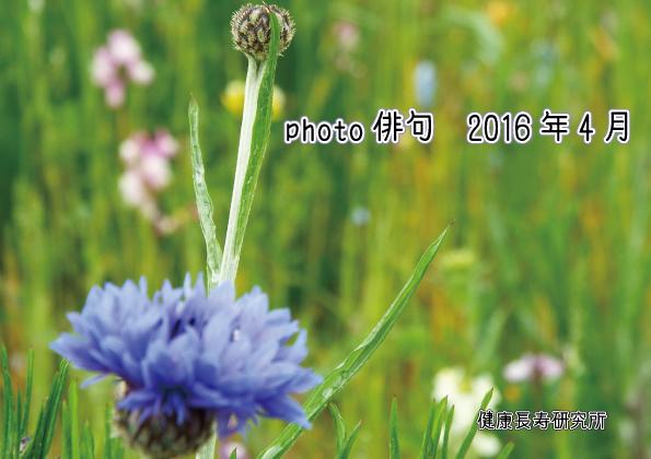 Photo俳句2016年4月投稿分