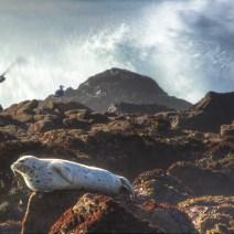 Sonoma-Coast-Landscape-Kevin-Kowalewski-4