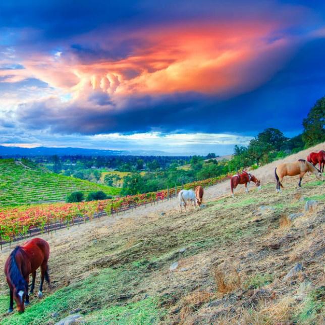 Sonoma-Landscape-Kevin-Kowalewski-1