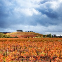 Vineyard-Sonoma-Landscape-Kevin-Kowalewski-1