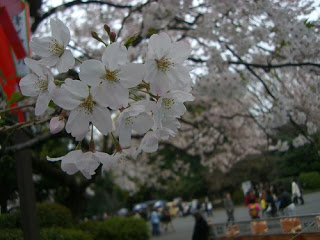 sakura_kevin_ready_japan_2007
