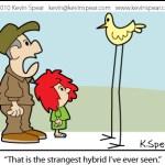 High Bird