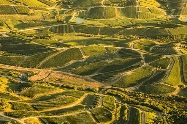 Anson  Why Uruguay could be the new Jura   Decanter Vineyards in Uruguay