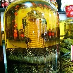 Cobra blood wine-Interesting Facts About Wine