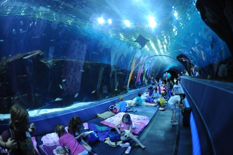The Aquarium's 100-foot long tunnel provides lots of sleeping space.