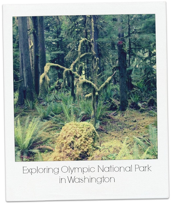 Olympic National Park in Washington Forest