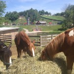 Horseshoe Resort Review Adventure Park Horses
