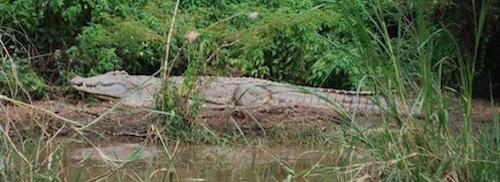 Crocodiles Ethiopia- Kid World Citizen
