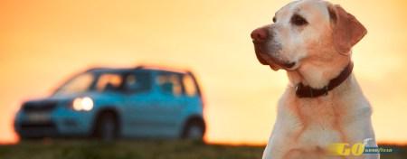Cómo llevar mascotas en el coche