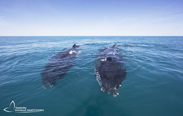 Whale watching magic off Broome's Cable Beach
