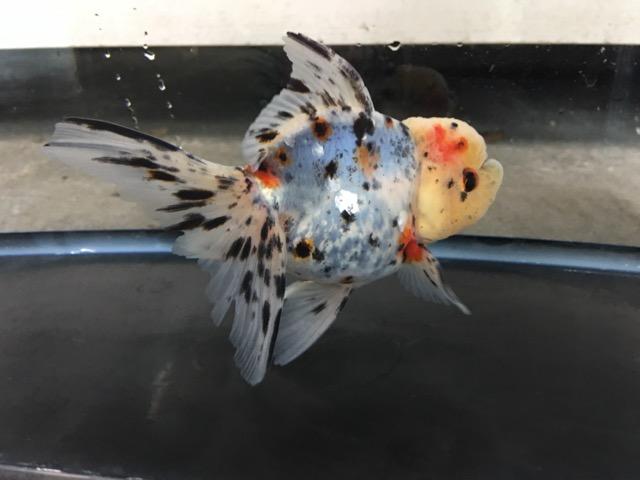 金魚と遊ぶ.com