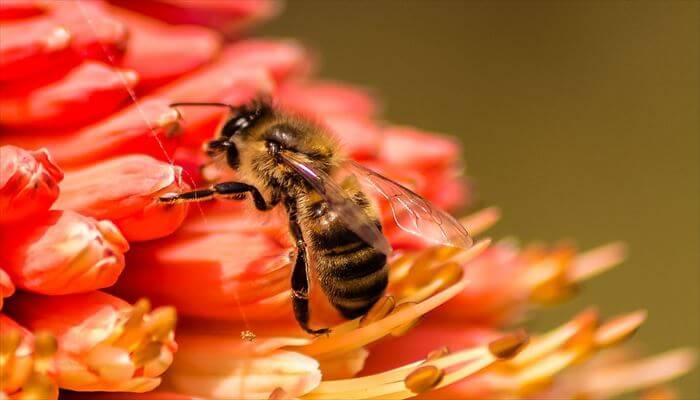 ミツバチ 巣 駆除方法