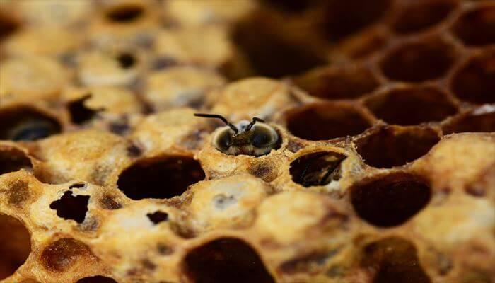 蜂の巣 駆除 方法