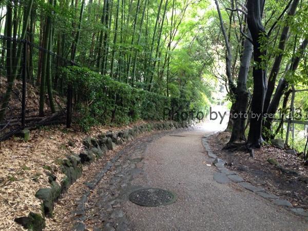 京都嵐山紅葉