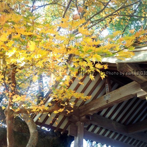 仙台日和山神社紅葉
