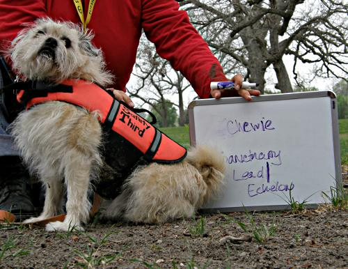 Chewie, a key volunteer for Sanctuary, Flipside's mental health team. Photo by Patrick, Web Content Team.