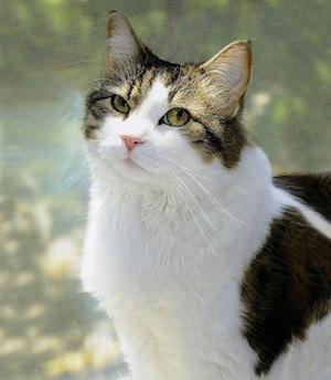 oscar_cat