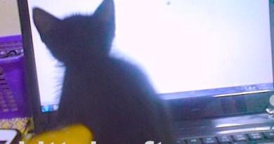 Kelly kucing Ichsan