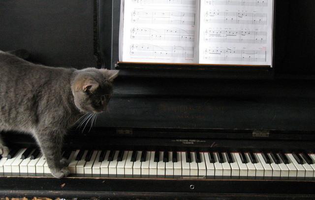 kucing main piano