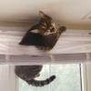 CatStuckInBlinds
