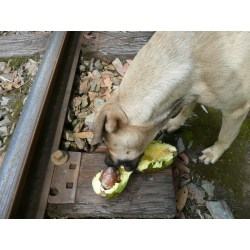 Small Crop Of Can Dogs Eat Avocados