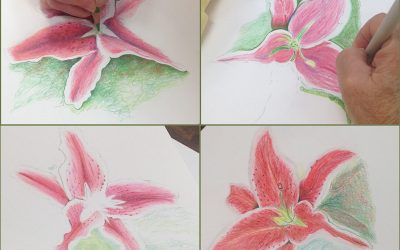 Colored Pencil Classes