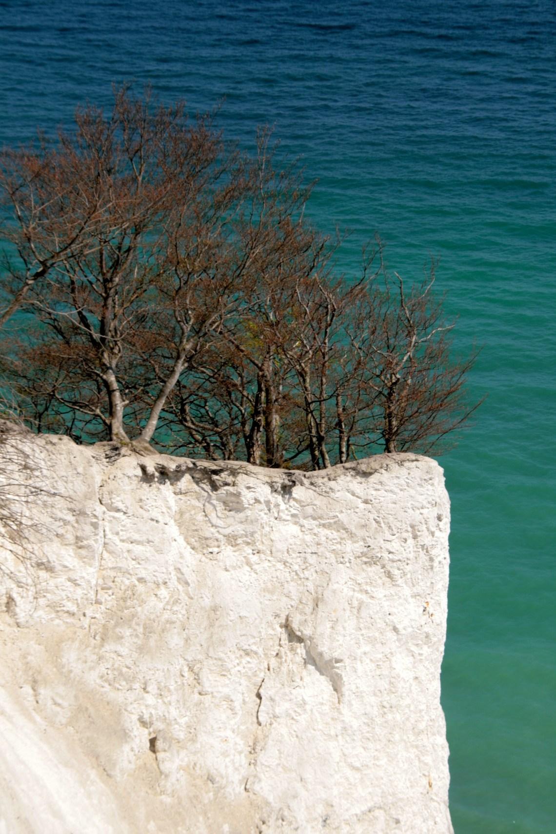 Het is een en al krijtrots, meer dan 100 meter hoog. De bomen groeien dapper door tot aan de rand, tot er weer een stuk rots naar beneden valt.