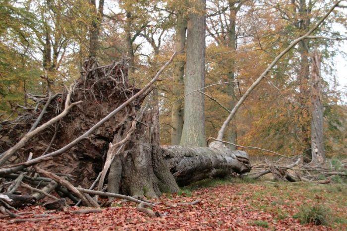 Gesneuvelde boom