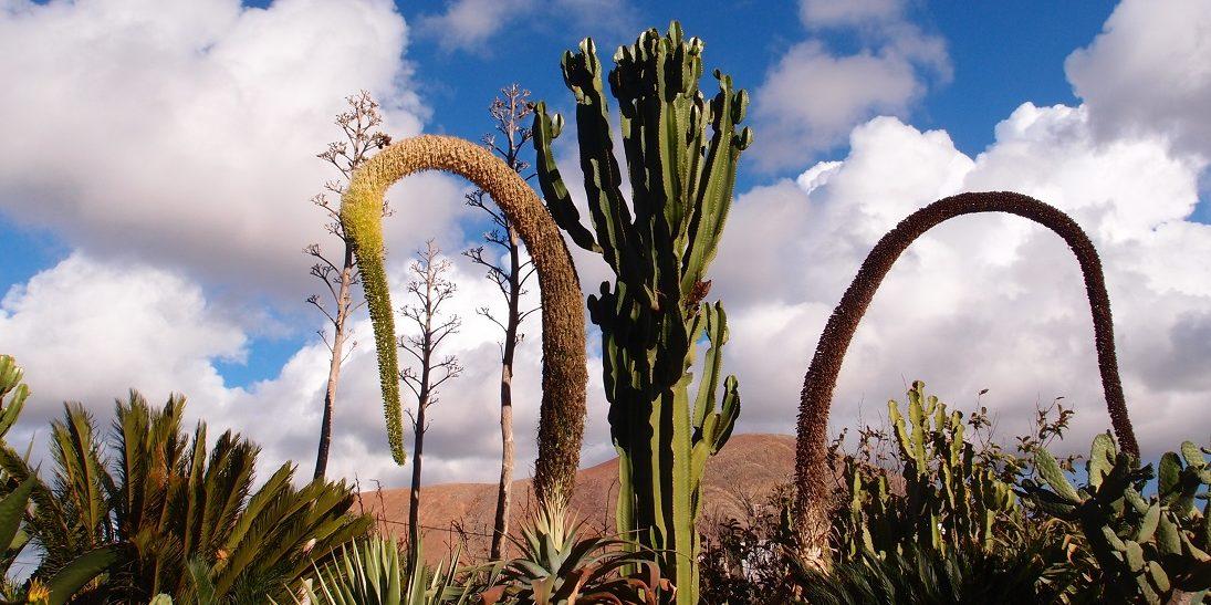 Lanzarote a Fuerteventura za zimních dnů