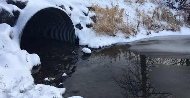 The Importance of Fish Friendly Culverts
