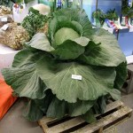 A giant cabbage at the Alaska State Fair in Palmer in 2009. Travis / Flickr